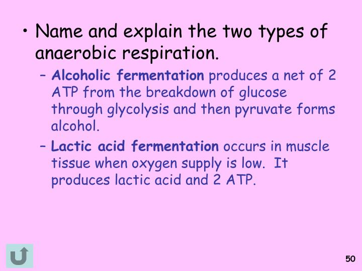 Name and explain the two types of anaerobic respiration.