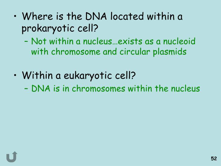 Where is the DNA located within a prokaryotic cell?