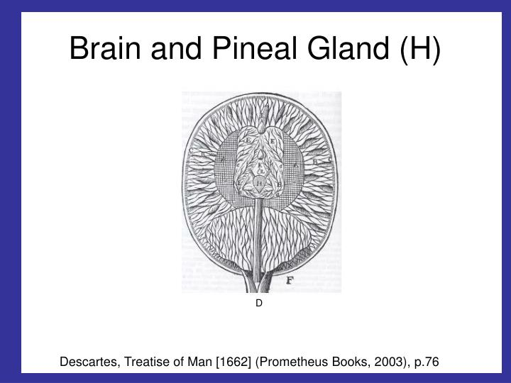Brain and Pineal Gland (H)