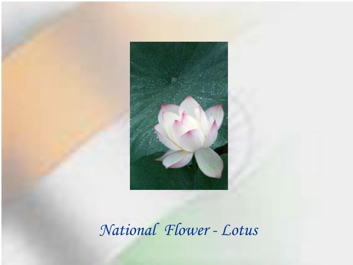 National  Flower - Lotus