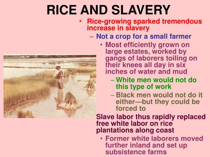 RICE AND SLAVERY