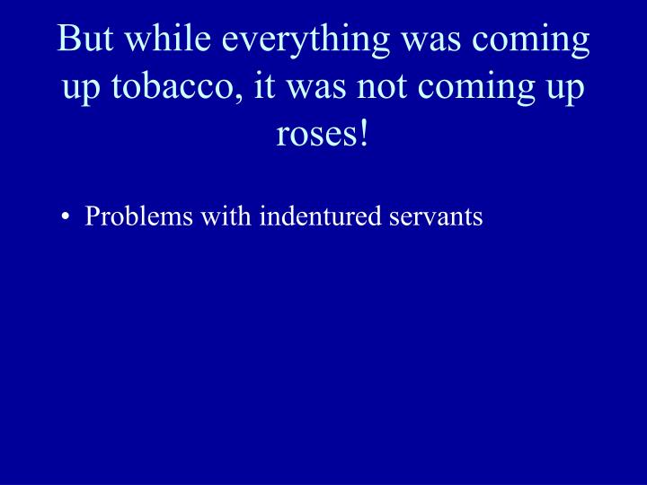 But while everything was coming up tobacco, it was not coming up roses!
