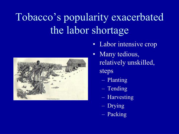 Tobacco's popularity exacerbated the labor shortage
