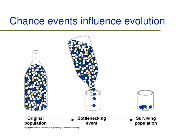 Chance events influence evolution