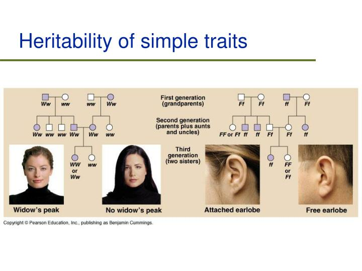 Heritability of simple traits