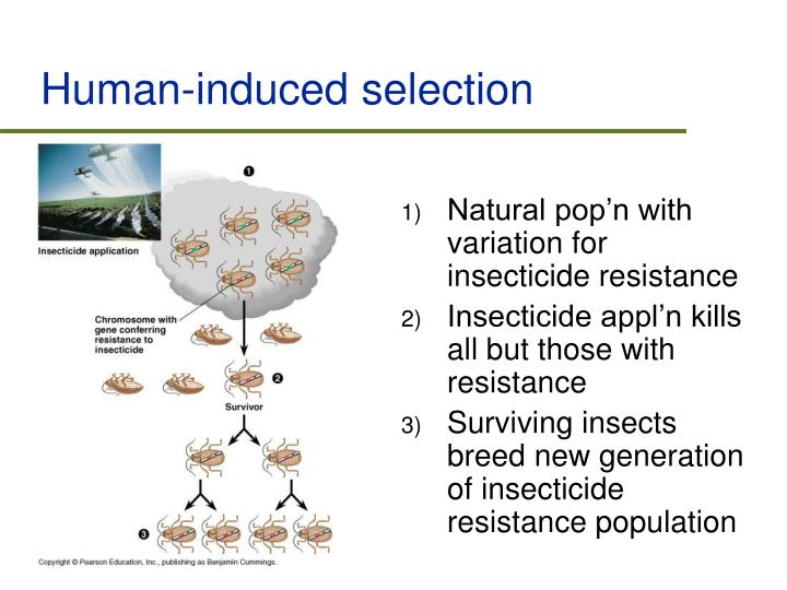 Human-induced selection