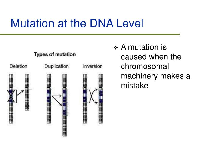 Mutation at the DNA Level
