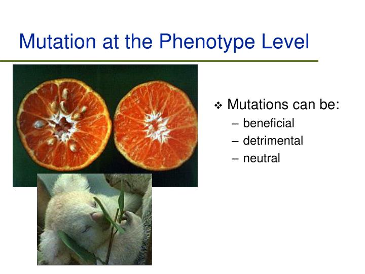 Mutation at the Phenotype Level