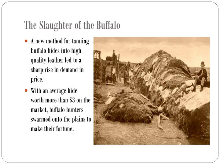 The Slaughter of the Buffalo