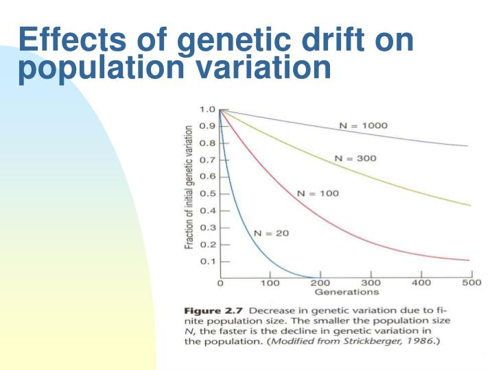 Effects of genetic drift on population variation