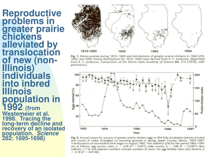 Reproductiveproblems in greater prairie chickens alleviated by translocation of new (non-Illinois) individuals into inbred Illinois population in 1992