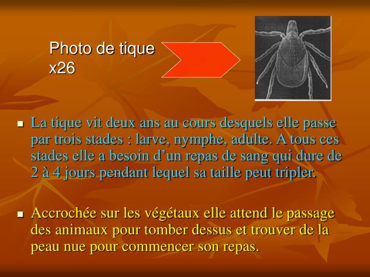 Photo de tique x26