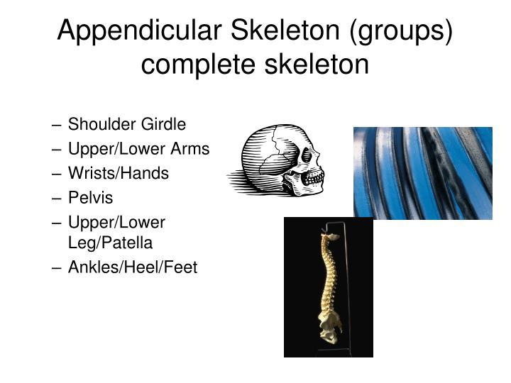 Appendicular Skeleton (groups)