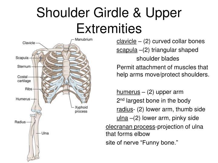 Shoulder Girdle & Upper Extremities
