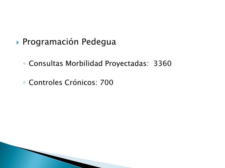 Programación Pedegua