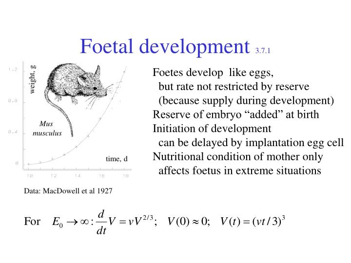 Foetal development