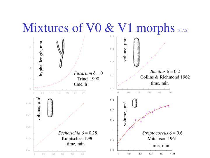 Mixtures of V0 & V1 morphs