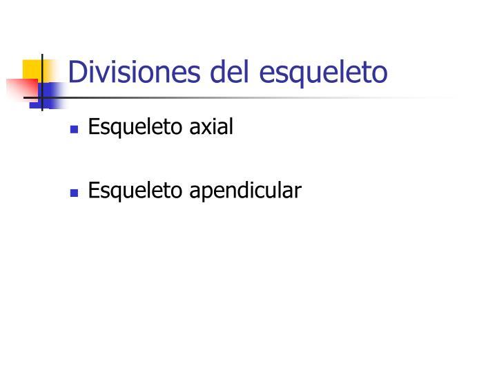 Divisiones del esqueleto