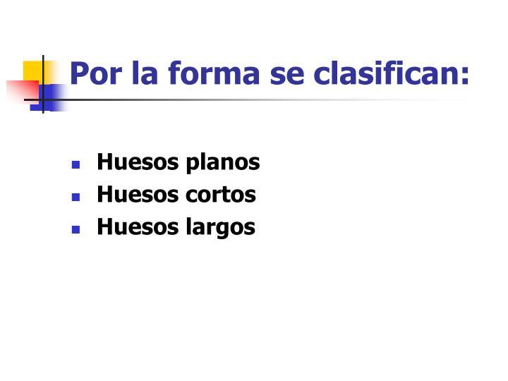 Por la forma se clasifican: