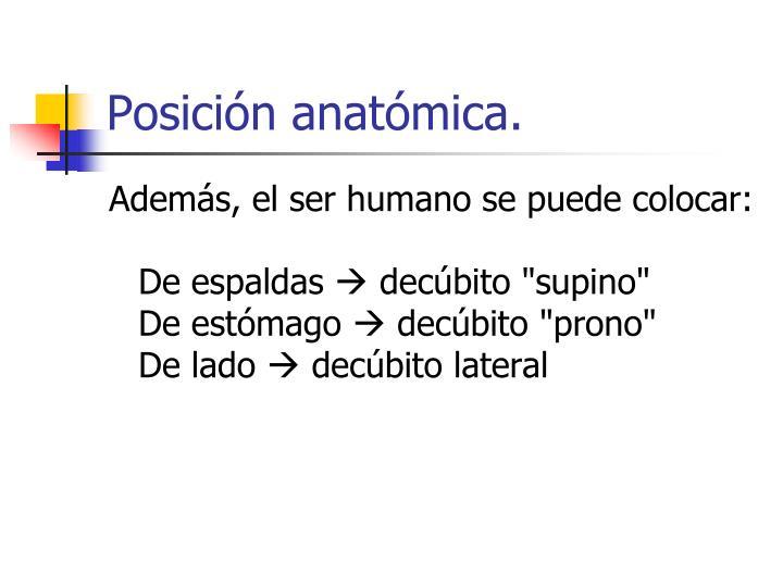 Posición anatómica.