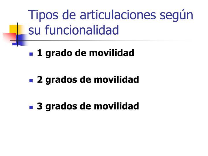 Tipos de articulaciones según su funcionalidad
