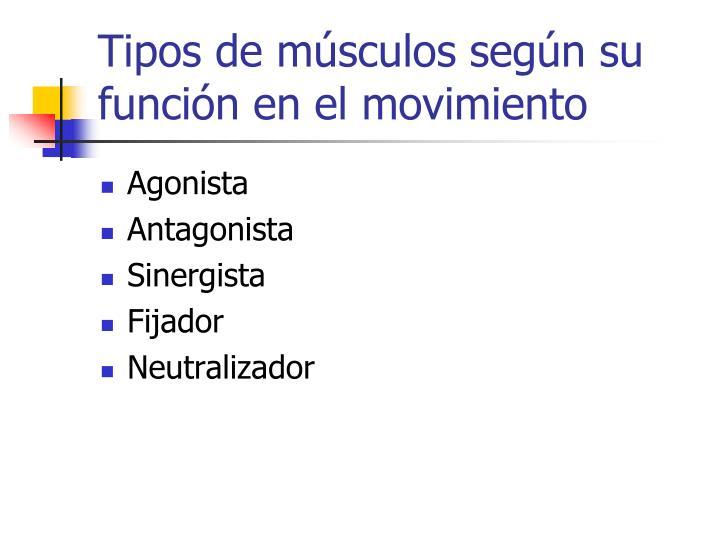 Tipos de músculos según su función en el movimiento
