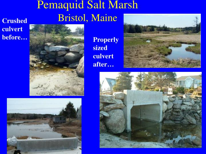 Pemaquid Salt Marsh