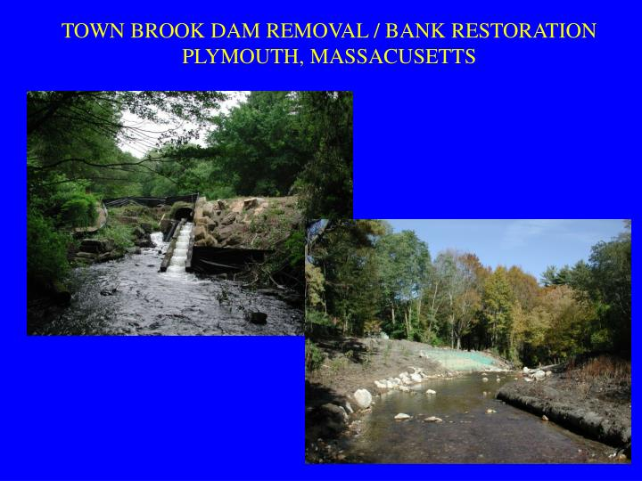 TOWN BROOK DAM REMOVAL / BANK RESTORATION