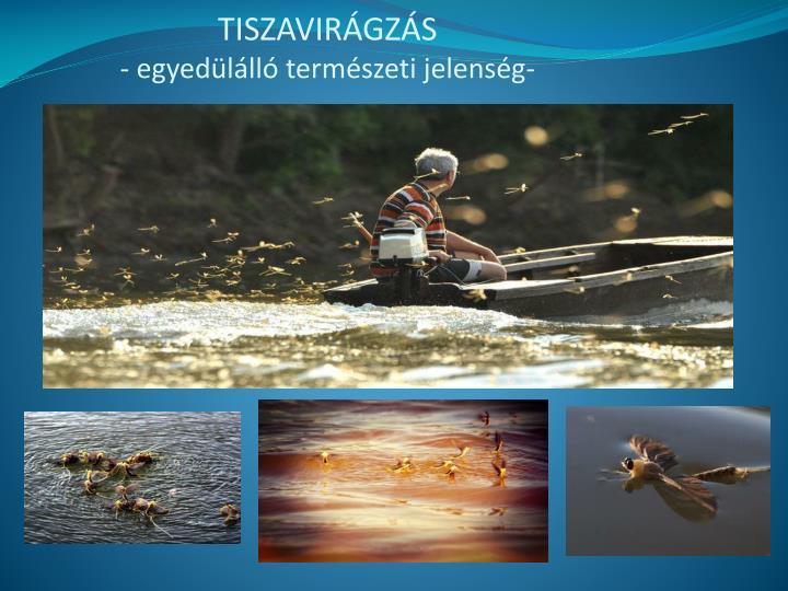 TISZAVIRÁGZÁS