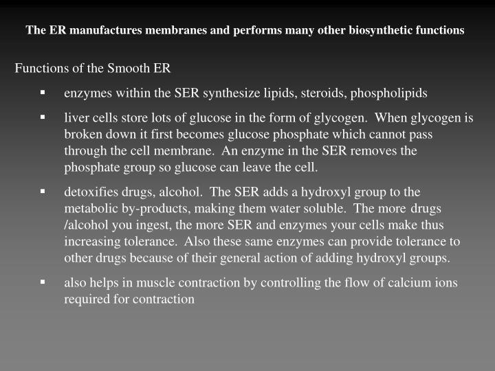 The ER manufactures membranes and performs many other biosynthetic functions