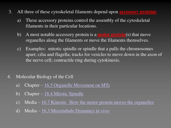 All three of these cytoskeletal filaments depend upon