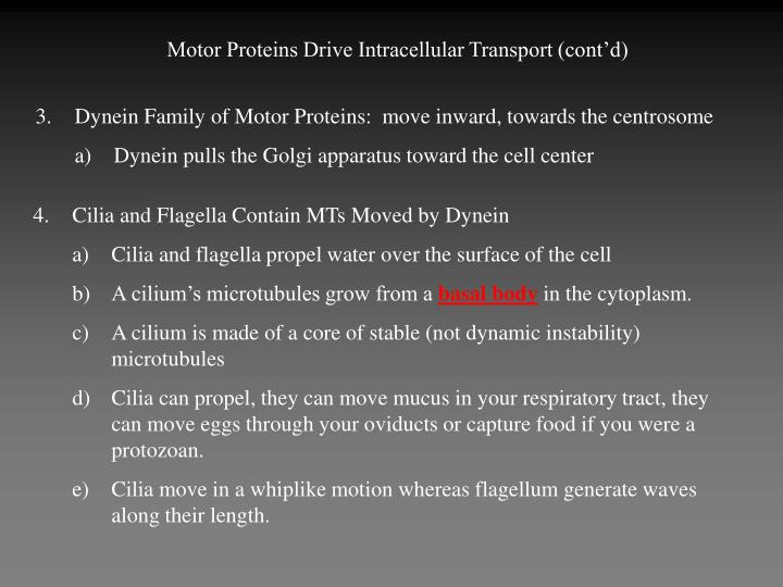Motor Proteins Drive Intracellular Transport (cont'd)