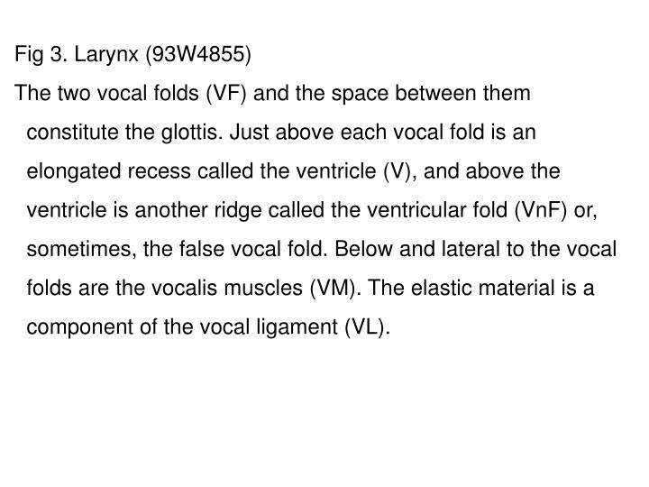 Fig 3. Larynx (93W4855)