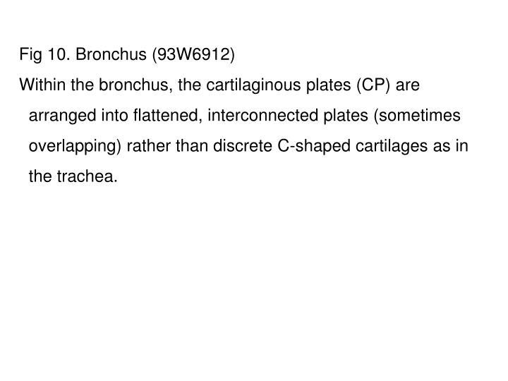 Fig 10. Bronchus (93W6912)