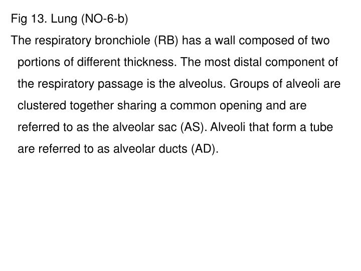Fig 13. Lung (NO-6-b)