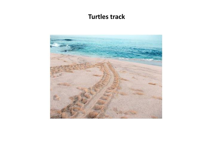 Turtles track