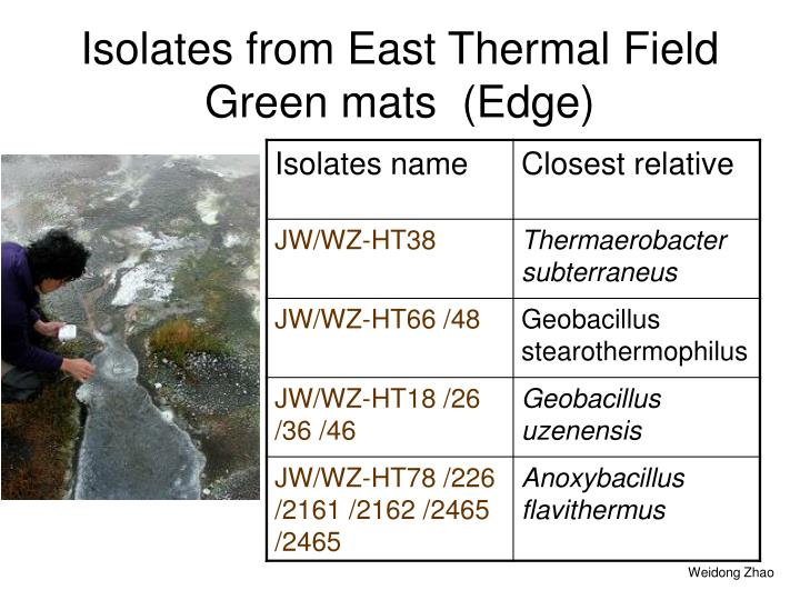 Isolates from East Thermal Field Green mats  (Edge)