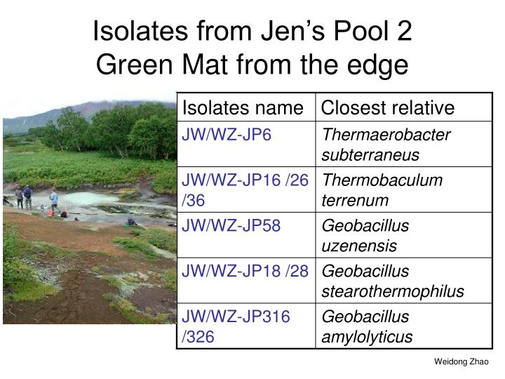 Isolates from Jen's Pool 2