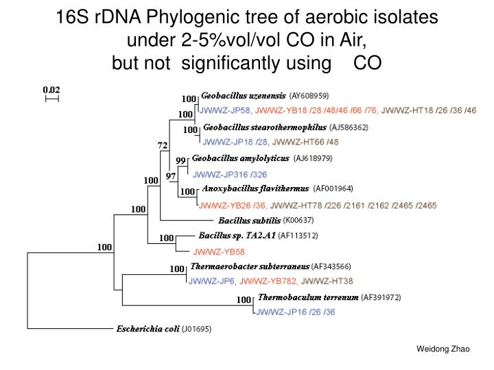16S rDNA Phylogenic tree of aerobic isolates under 2-5%vol/vol CO in Air,