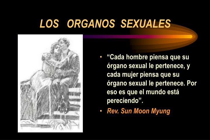 LOS   ORGANOS  SEXUALES