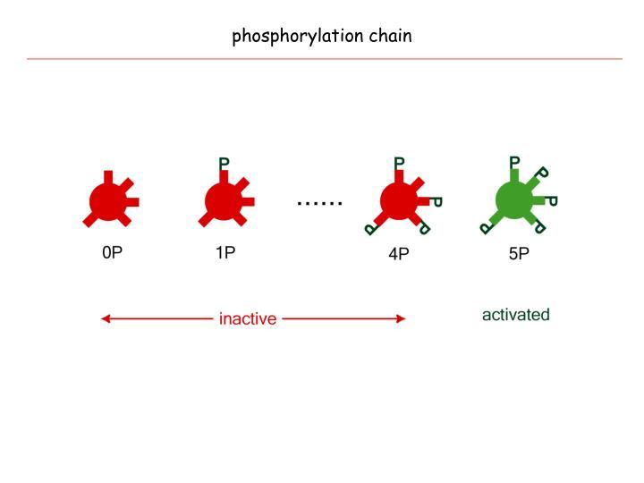 phosphorylation chain