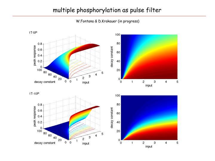 multiple phosphorylation as pulse filter