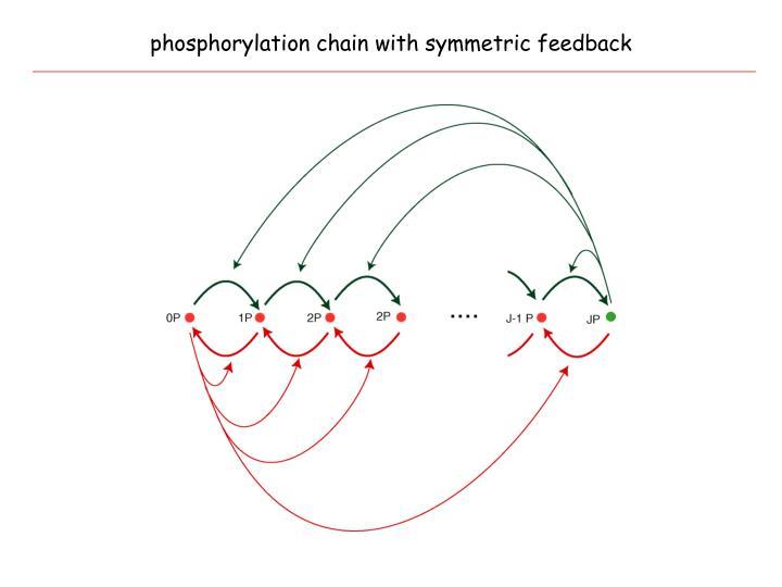 phosphorylation chain with symmetric feedback