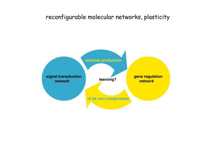 reconfigurable molecular networks, plasticity