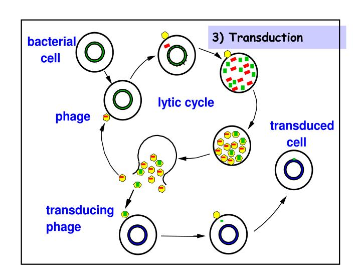 3) Transduction