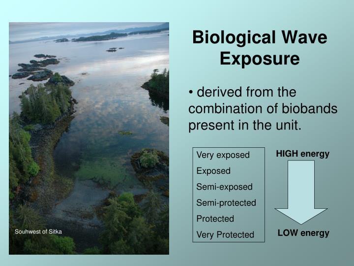 Biological Wave Exposure