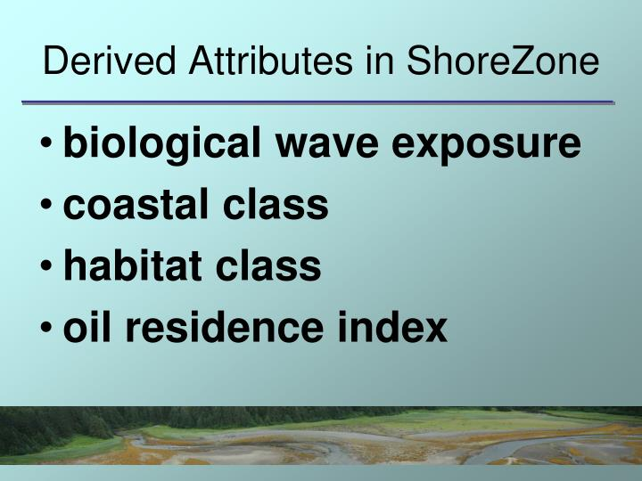 Derived Attributes in ShoreZone