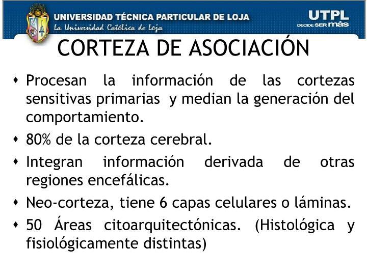 CORTEZA DE ASOCIACIÓN
