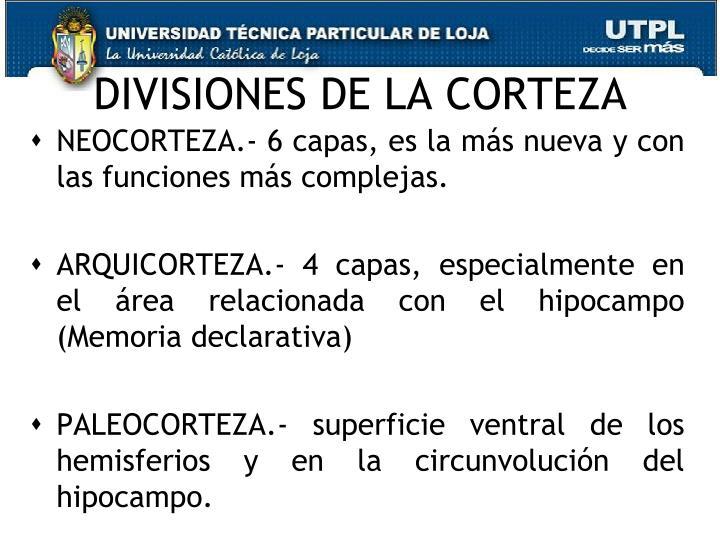 DIVISIONES DE LA CORTEZA