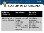estructura de la amigdala